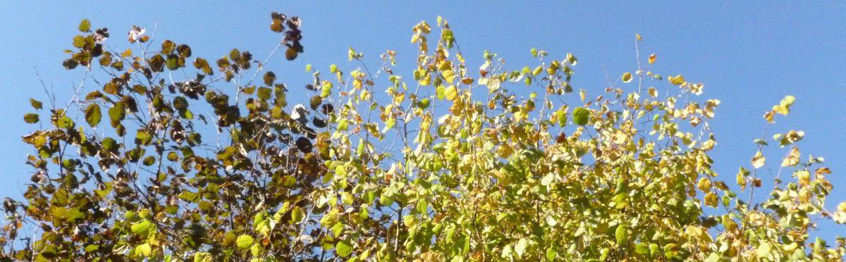 Herbstliche Garten-Abstinenz